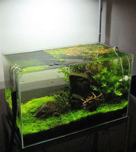 Aquarium Hood Design | tetrascape designs 20 gallon freshwater planted tank