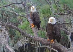 nefl archived videos 2015 2016 season american eagle