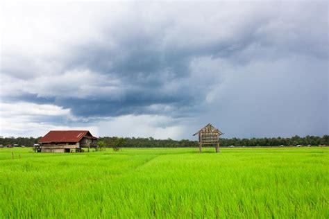gambar pemandangan sawah indonesiadalamtulisan
