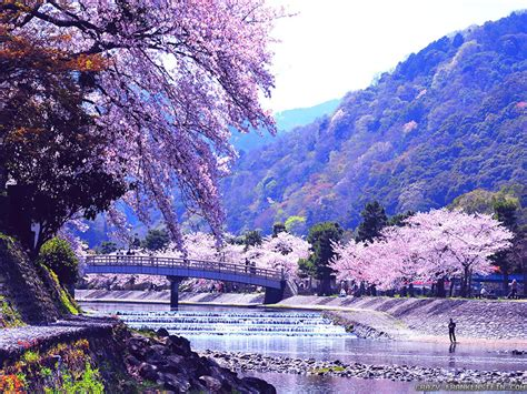 wallpaper hp korea hd spring nature wallpapers i hd images