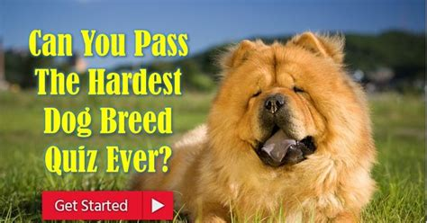 what breed is best for me what is best for me quiz breed breeds picture