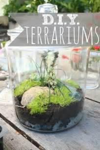 diy terrarium terrariums home sweet home pinterest