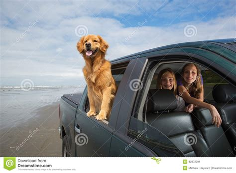 golden retriever driving commercial on a drive stock image image of truck drive getaway