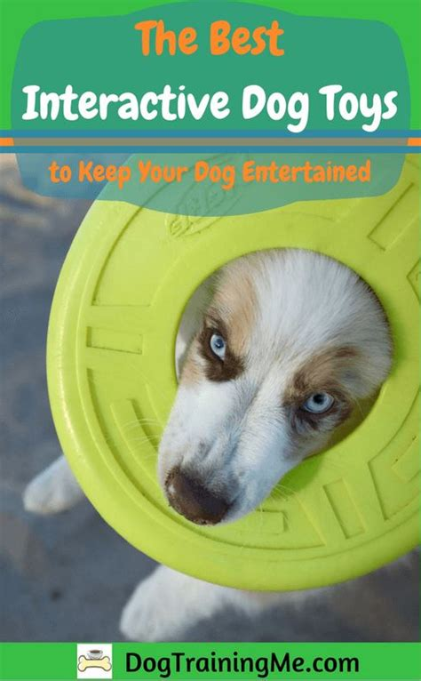 interactive toys for dogs best 25 interactive toys ideas on diy