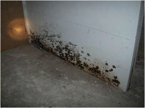 basement mold symptoms basement flooring archives home renovation team