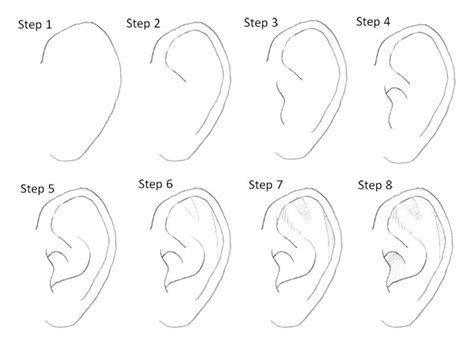Sketches Step By Step by Drawing Ears Step By Step Desenhos Tutoriais