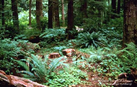 Plants That Live In The Forest Floor by Community And Ecosystem Dynamics