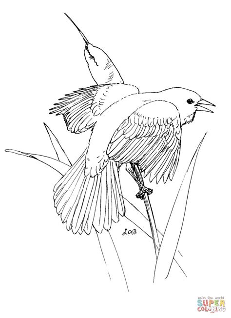 bird wing coloring page bird coloring pages 6 bird wing coloring page