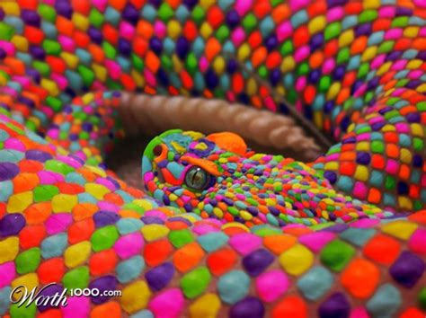 colorful snakes colorful snakes images