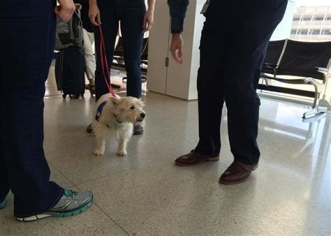 colleges that allow dogs more colleges allow comfort pets in dorms davidson among wfae