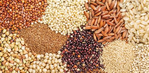 whole grains in the whole grains council