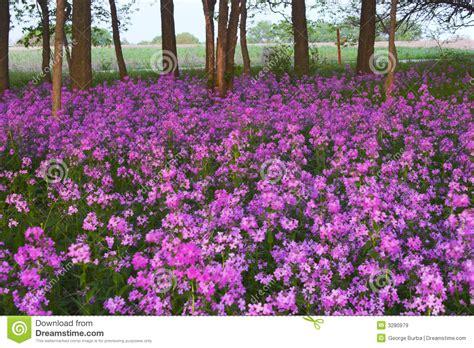 imagenes flores salvajes flores salvajes y bosque rosados