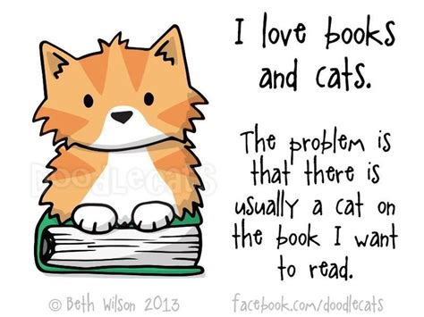The Stuff On My Cat Book by 419 Best Cats And Books Images On Cats