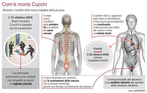 il caso cucchi stefano cucchi le cause della morte infografica tgcom24