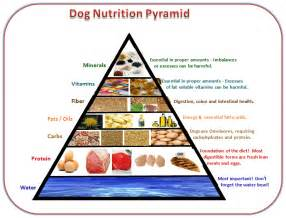 feeding your dog a nutritionally balanced diet