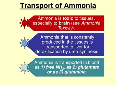 How To Detox Ammonia From Brain by Proteinmetbolism Part1