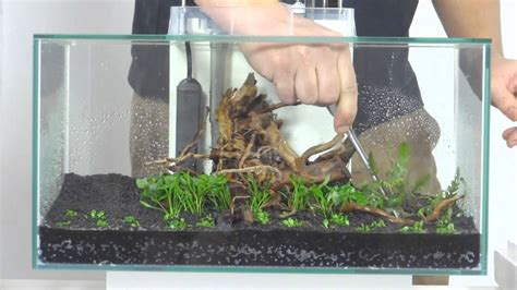 fluval aquascape aquascaping fluval edge klein youtube