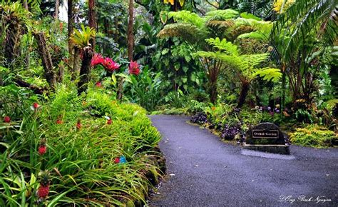 Panoramio Photo Of Orchid Garden Hawaii Tropical Hawaii Tropical Botanical Garden