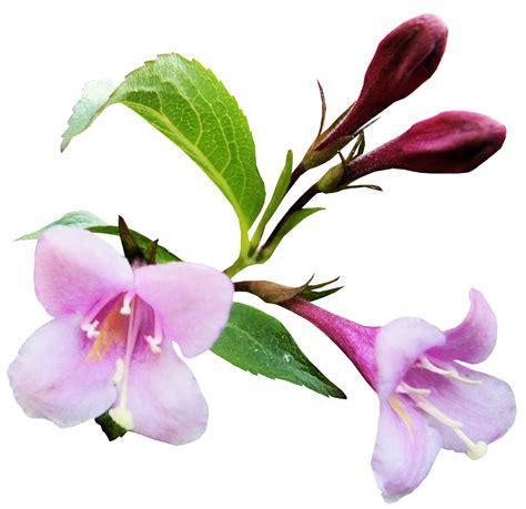 imagenes flores png marcos gratis para fotos scrap amor y amistad dia de san