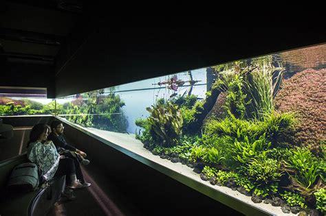 Aquascape Aquarium Plants Temporary Exhibition 187 Exhibitions 187 Ocean 225 Rio De Lisboa
