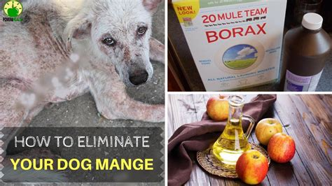 how to treat puppy mange 88 scabies treatment for dogs 15 how does vinegar kill fleas work to get