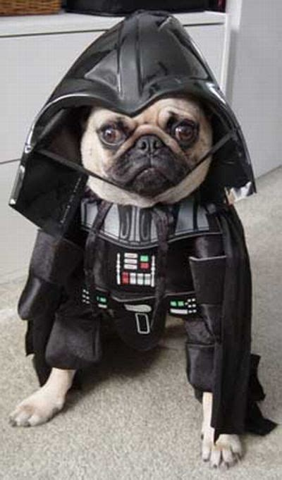 wars puppy wars costume 6 costume craze