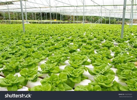 Hydroponic Vegetable Garden Grow Hydroponic Vegetable Hydroponic Vegetable Gardening