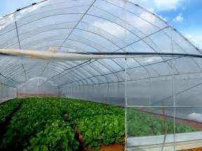 Green Home Design And Construction Kamloops Greenhouse Construction Choose The Best Greenhouse Site