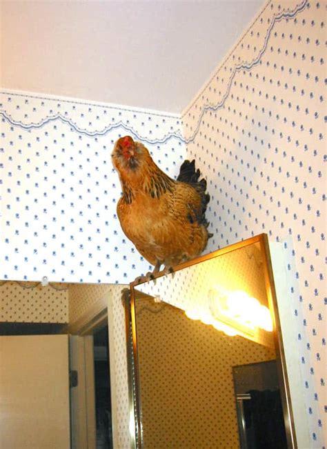 chicken research paper research paper on photography la maison des vignerons