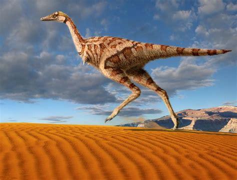 dinosauri volanti parrot size dinosaur adds to tale of evolution