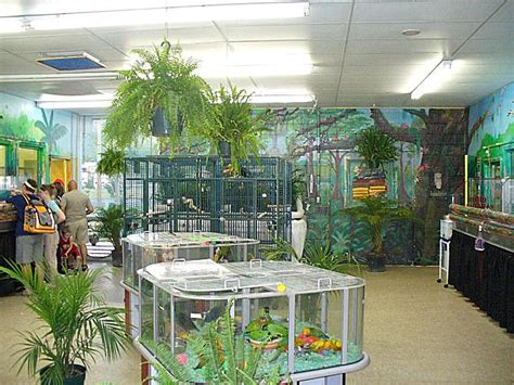 best 28 pet stores near me that sell birds parrot