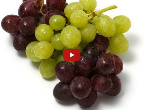 are dogs allergic to grapes top poisoning culprits in dogs shih tzu city