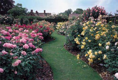 imagenes de rosas jardin rosas para tu jard 237 n noticias de cali el valle y colombia