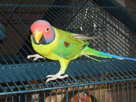 top 28 bird rescue tucson tucson parrot rescue gallery