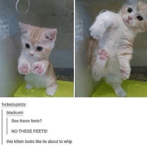 Lesbian Cat Meme - fvckedupkids blackumi see these feets no these feets
