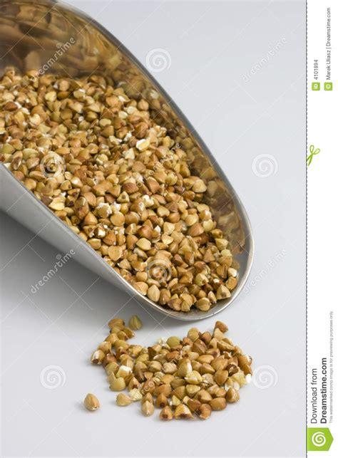 whole grains kasha scoop of buckwheat kasha toasted whole grain stock
