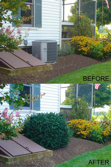 Landscape Ideas To Hide Electrical Box Electrical Box By Shrub Free Engine Image