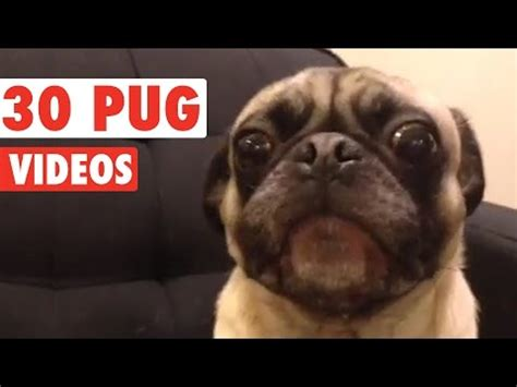 tv show compilation doug the pug 50 shades of doug the pug doovi