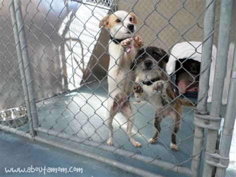 family dogs new shelter family rescue happy families about a