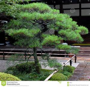 Japanese by Japanese Pine Stock Photography Image 33612