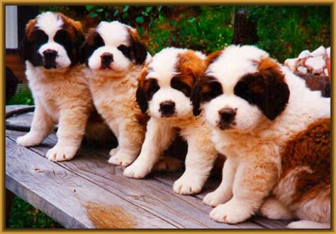 ver imagenes sorprendentes de animales ver fotos de perros de raza grandes y peque 241 as imagenes