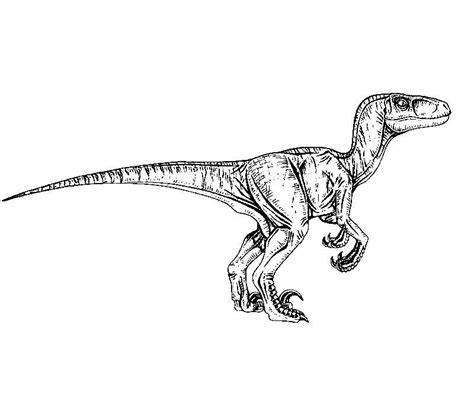 Coloring Page Velociraptor by Jurassic Park Raptor Coloring Pages Awesome Velociraptor
