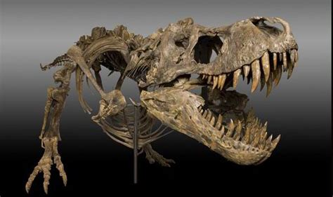 Who Find Dinosaur Bones Discovered Dinosaur Bones Found In Us Field Set To Sell For Millions World News