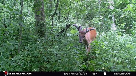 best trail how to get the most out of your trail cameras bowhunter