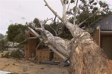 tree falls on house tree falls on house in storm 23 09 2013 abc news australian broadcasting corporation