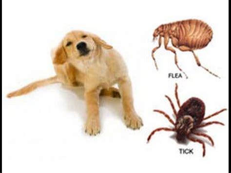 ticks in bathroom solucion final eliminar pulgas y garrapatas mascotas