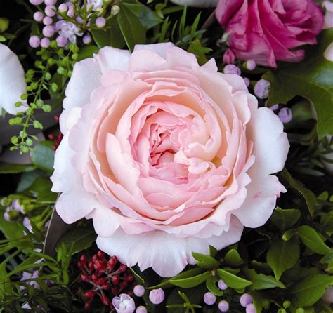 Vase Garden Keira Garden Rose Roses Flowers By Category Sierra