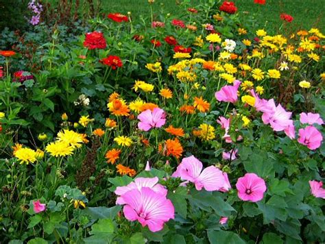 flower in garden flower bed pictures flower garden pictures