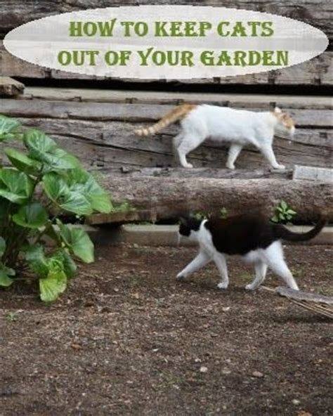 gardens i love cats and the plant on pinterest