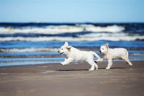 pet friendly gulf shores rentals fort property